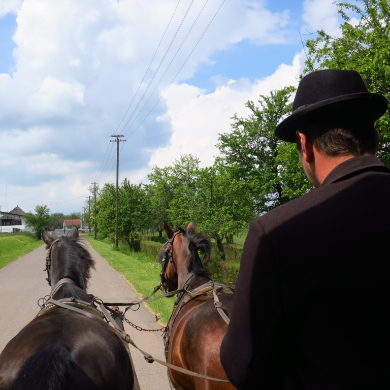 Trip to the Puszta with the horse-carriage